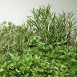 fines-herbes