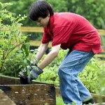 boy-planting-vegetables-in-garden