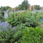 le-jardin-en-bacs-parkdale