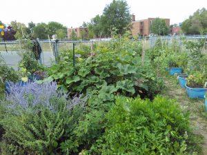le-jardin-en-bacs-de-lecole-parkdale